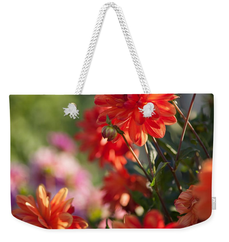 Flower Weekender Tote Bag featuring the photograph Beautiful Day by Mike Reid