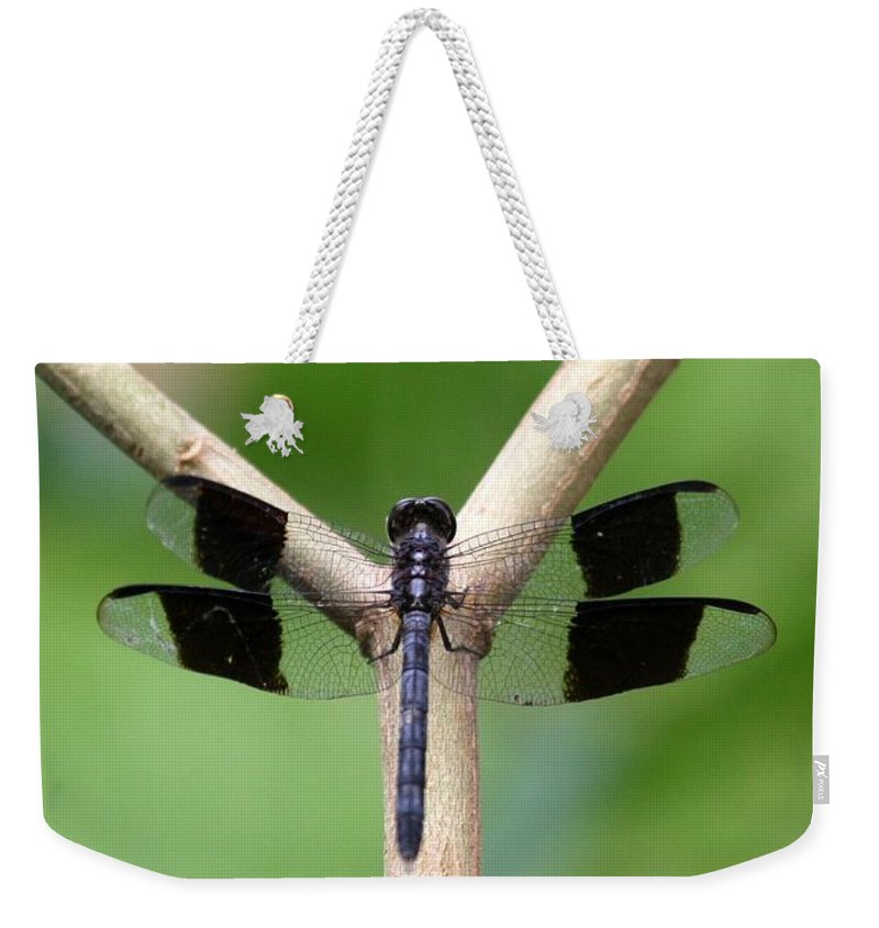 Dragon Weekender Tote Bag featuring the photograph Beautiful Dragonfly by Sabrina L Ryan