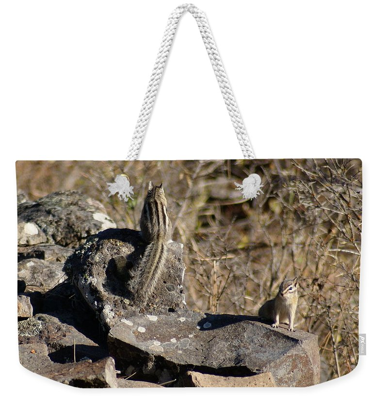 Chipmunks Weekender Tote Bag featuring the photograph Beautiful Munks by Ben Upham III