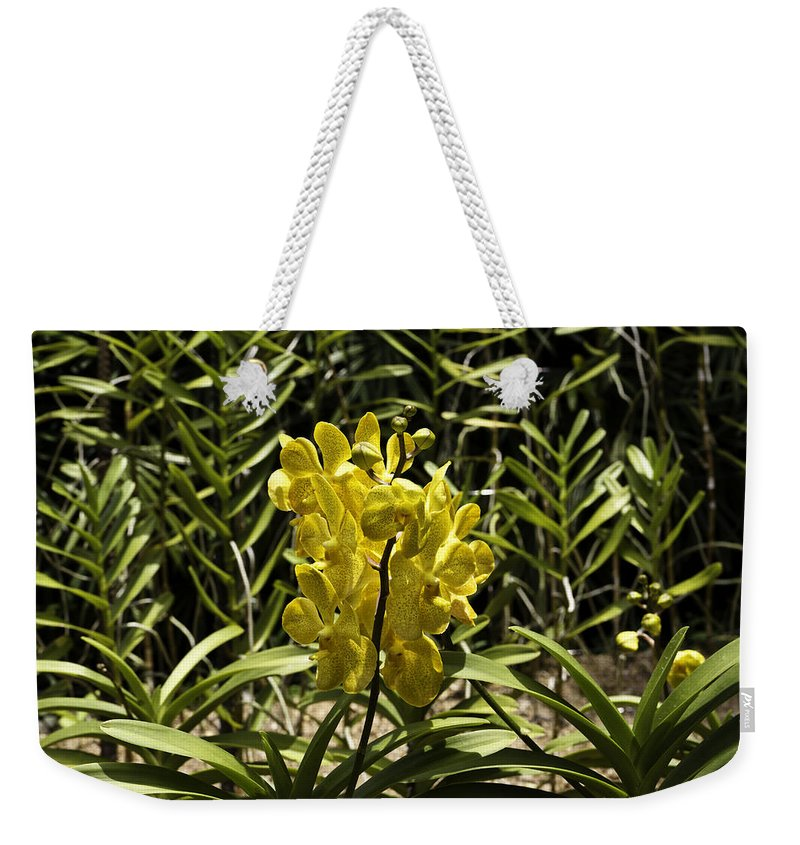 Asia Weekender Tote Bag featuring the photograph Beautiful Yellow Flowers Inside The National Orchid Garden In Singapore by Ashish Agarwal