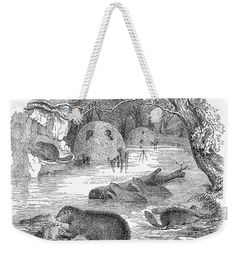 19th Century Weekender Tote Bag featuring the photograph Beavers by Granger