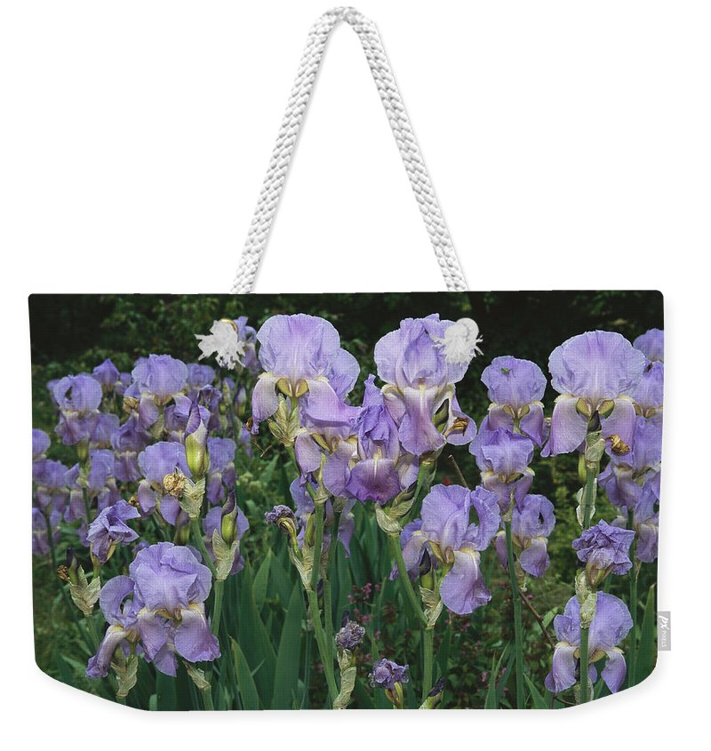 Plants Weekender Tote Bag featuring the photograph Bed Of Irises, Provence Region, France by Nicole Duplaix