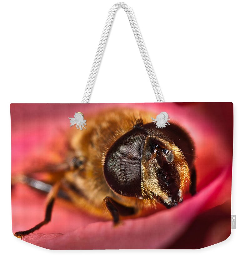 Bee Weekender Tote Bag featuring the photograph Bee On Rose Petal by Greg Nyquist