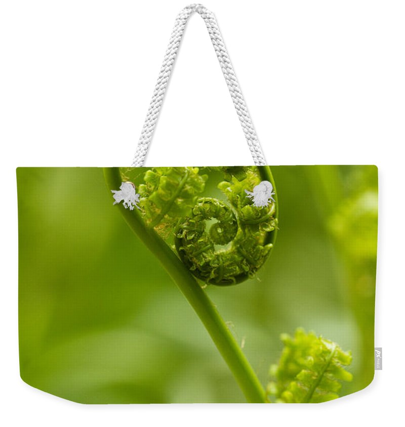 Fern Weekender Tote Bag featuring the photograph Beginnings by Carrie Cranwill