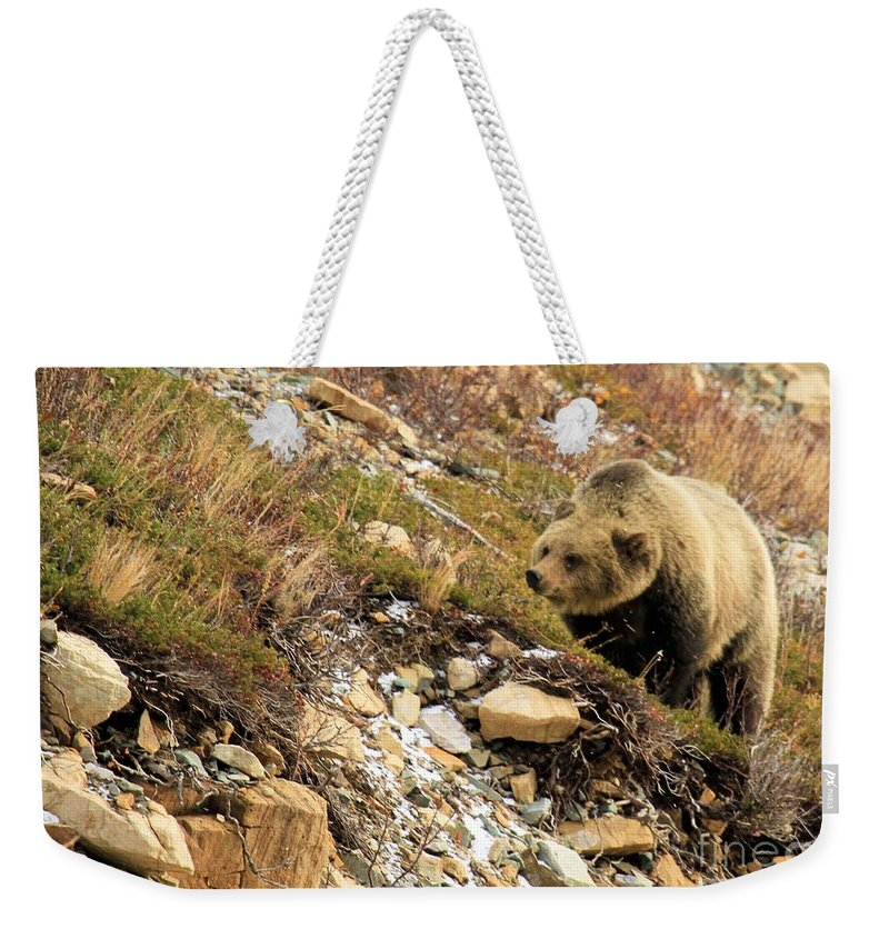 Grizzly Bear Weekender Tote Bag featuring the photograph Berry Sniffer by Adam Jewell