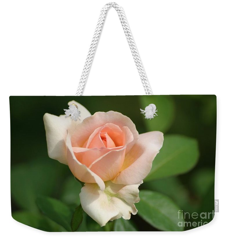 Betty White Rose Weekender Tote Bag featuring the photograph Betty White Rose by Living Color Photography Lorraine Lynch