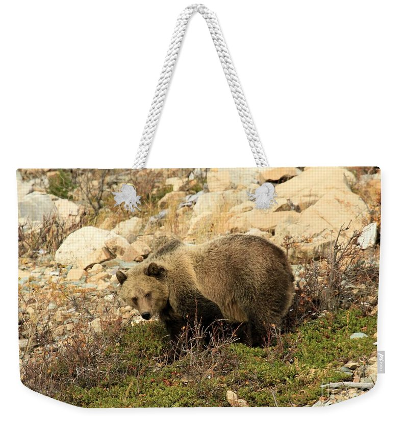 Grizzly Bear Weekender Tote Bag featuring the photograph Between A Rock And A Hard Place by Adam Jewell