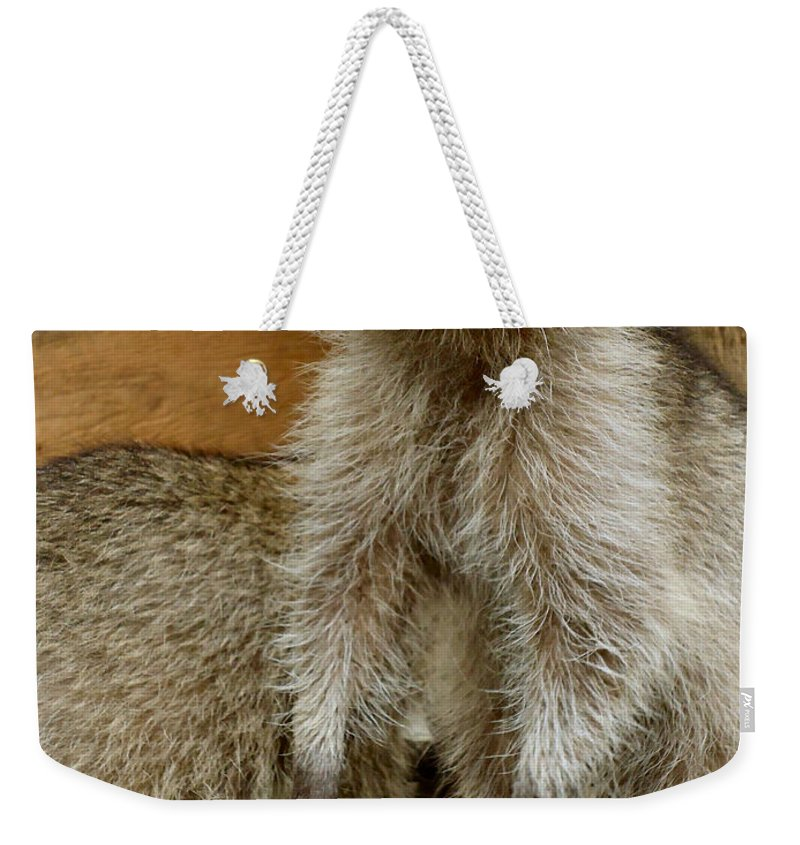 Raccoon Weekender Tote Bag featuring the photograph Big And Tall by Art Dingo
