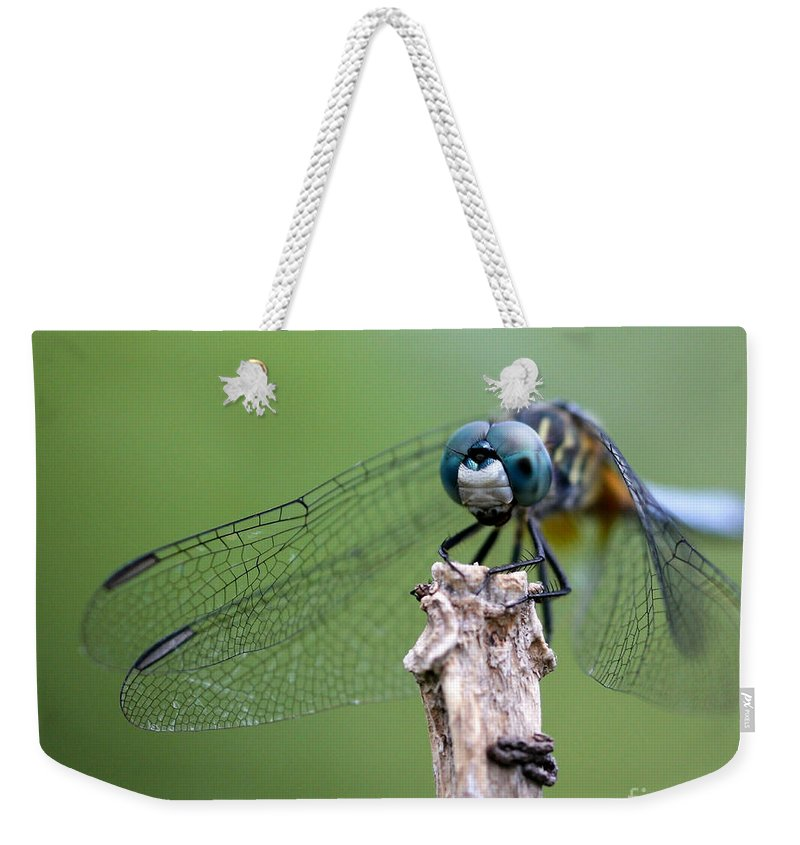 Landscape Weekender Tote Bag featuring the photograph Big Eyes Blue Dragonfly by Sabrina L Ryan