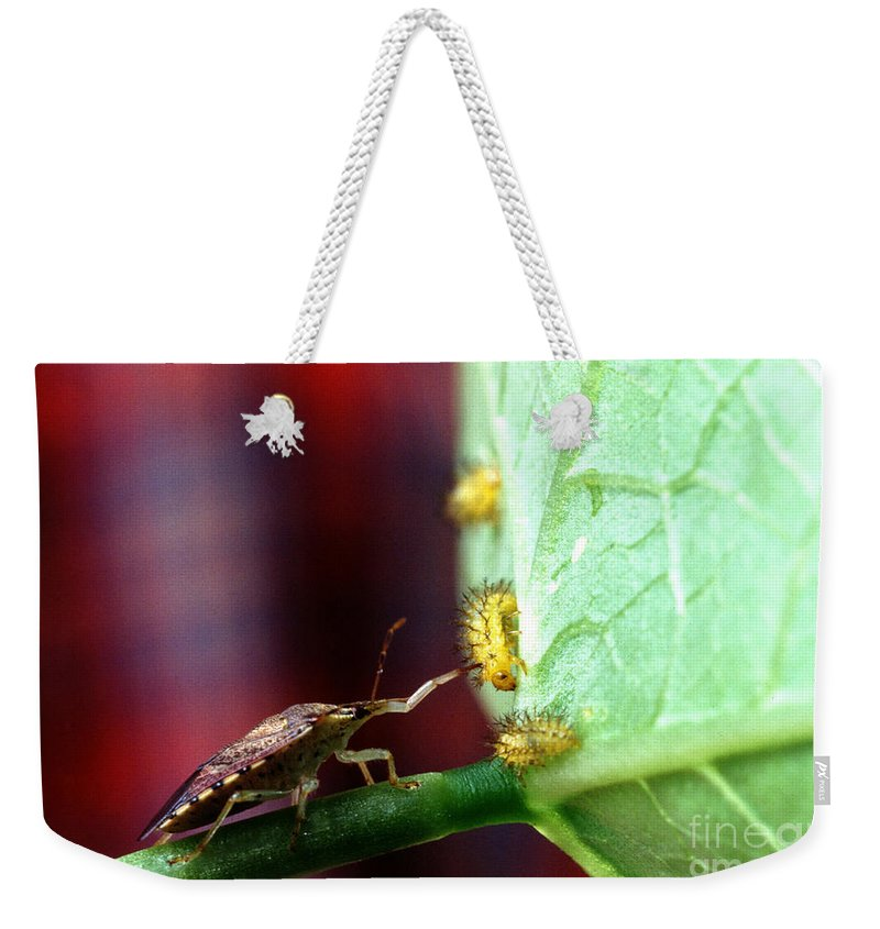 Mexican Bean Beetle Weekender Tote Bag featuring the photograph Biocontrol Of Bean Beetle by Science Source