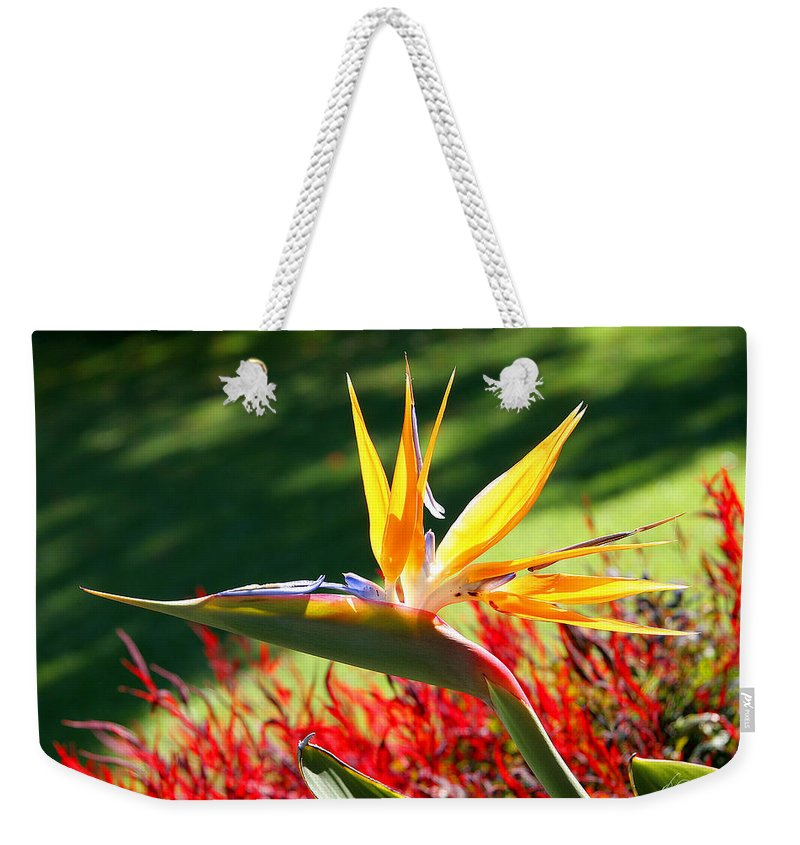 Flower Weekender Tote Bag featuring the photograph Bird Of Paradise by Diana Haronis