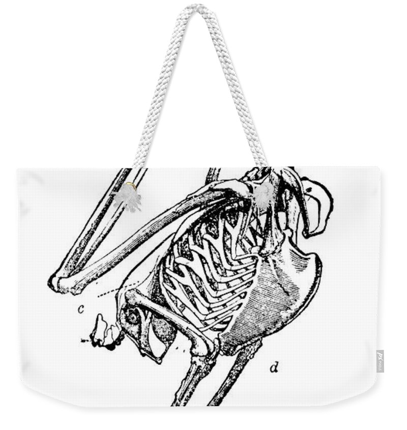 19th Century Weekender Tote Bag featuring the photograph Bird Skeleton by Granger