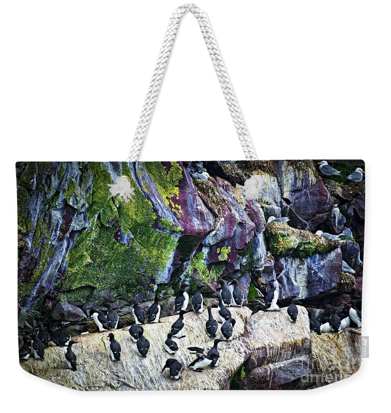 Cape Weekender Tote Bag featuring the photograph Birds At Cape St. Mary's Bird Sanctuary In Newfoundland by Elena Elisseeva
