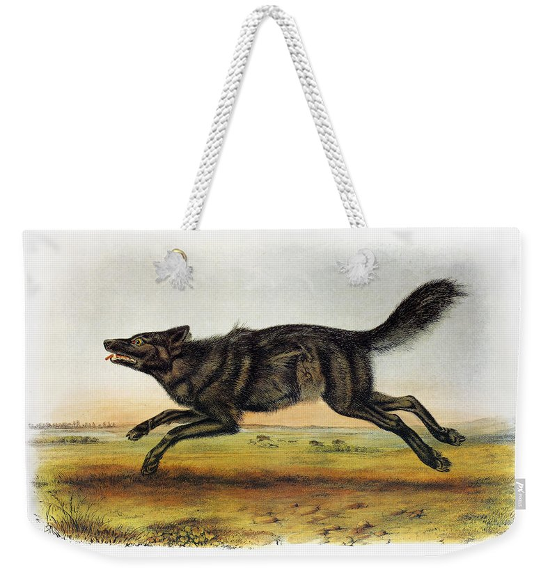 1846 Weekender Tote Bag featuring the photograph Black American Wolf by Granger
