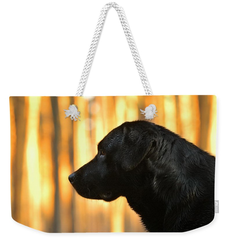 Animal Weekender Tote Bag featuring the photograph Black And Gold by Waldek Dabrowski