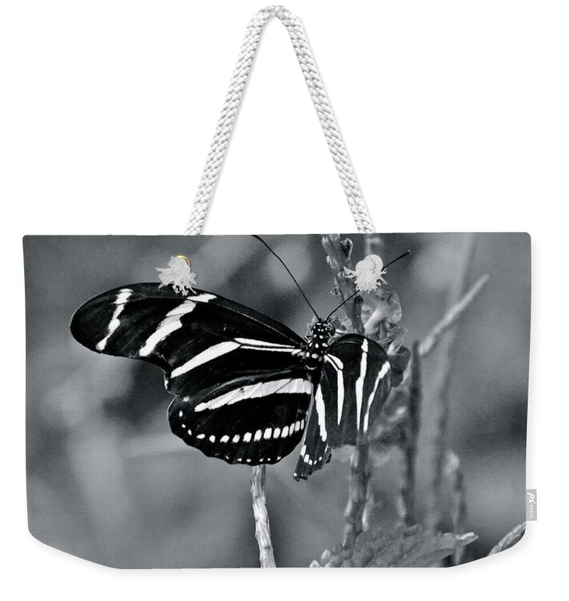 Butterfly Weekender Tote Bag featuring the photograph Black And White Butterfly by Carol Bradley