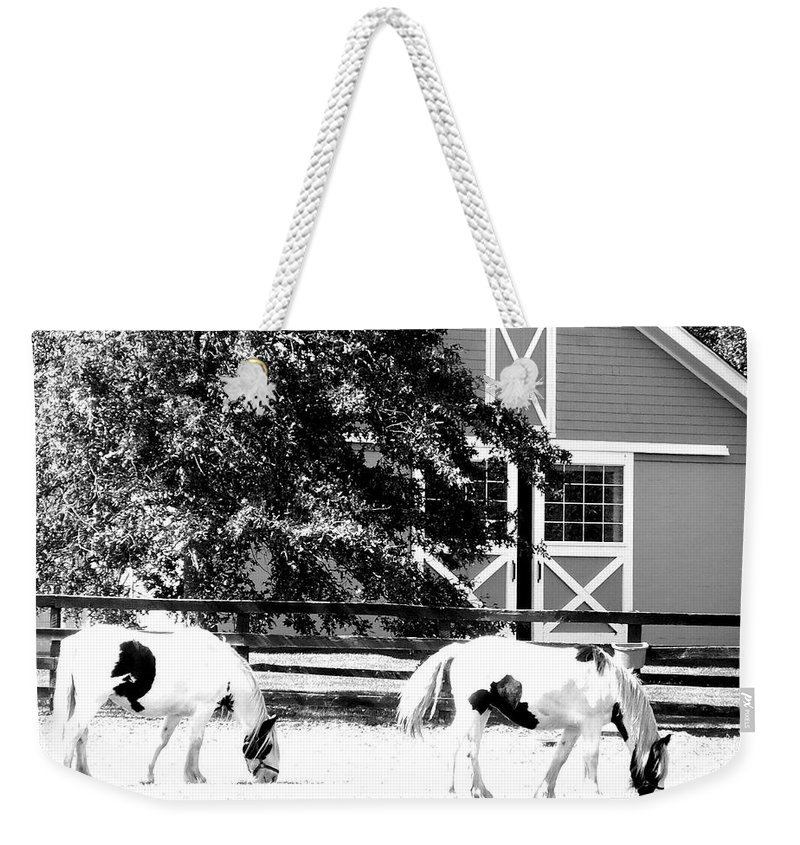 Horses Weekender Tote Bag featuring the photograph Black And White Clydesdale Grazing by Kimberly Perry