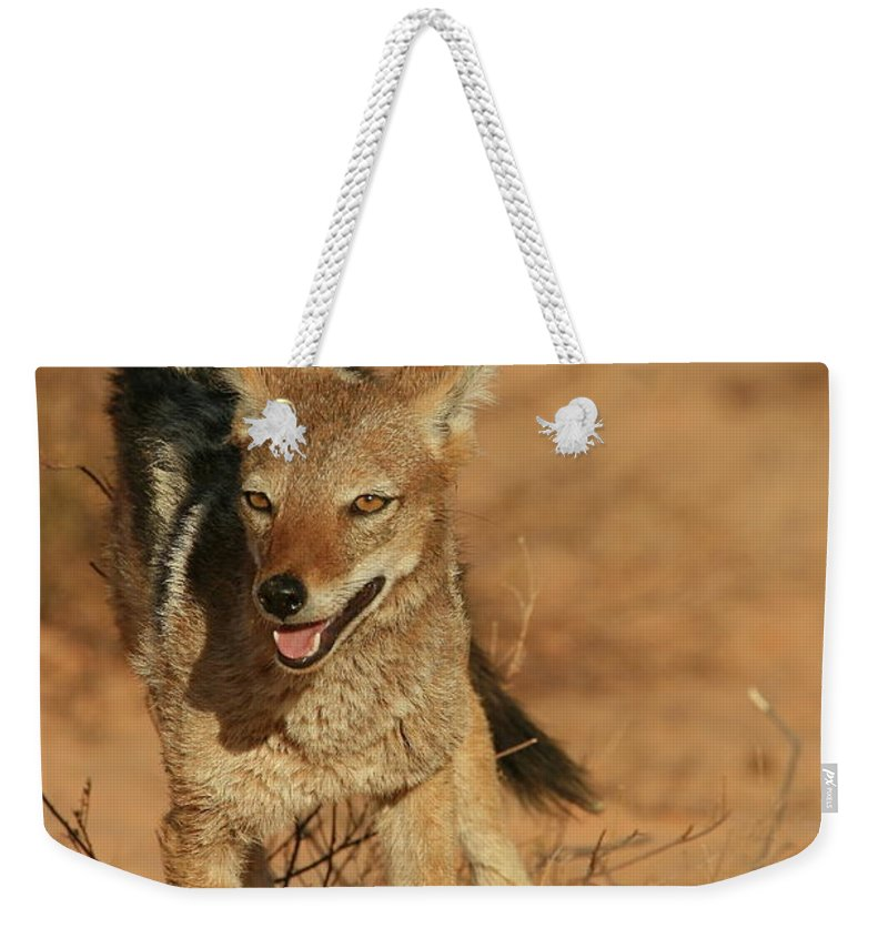 Africa Weekender Tote Bag featuring the photograph Black-backed Jackal by Bruce J Robinson