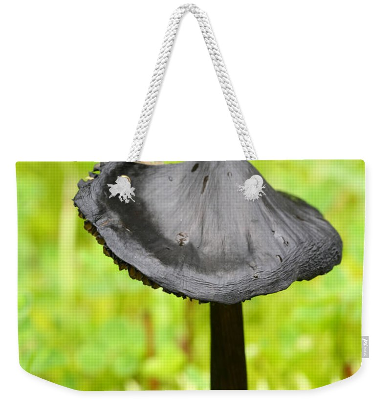 Doug Lloyd Weekender Tote Bag featuring the photograph Black Beauty by Doug Lloyd