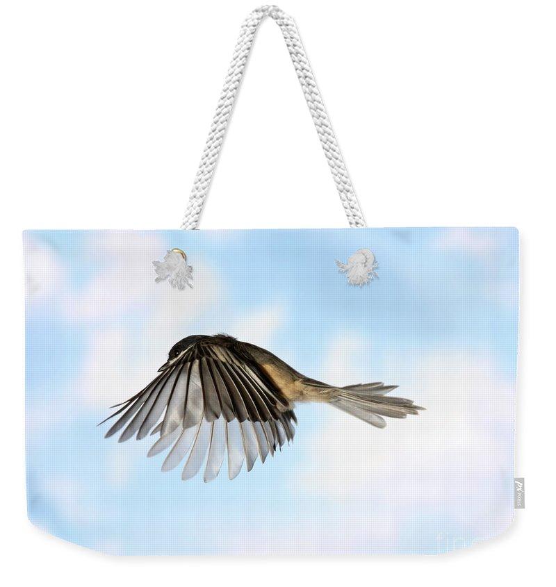 Black-capped Chickadee Weekender Tote Bag featuring the photograph Black-capped Chickadee In Flight by Ted Kinsman