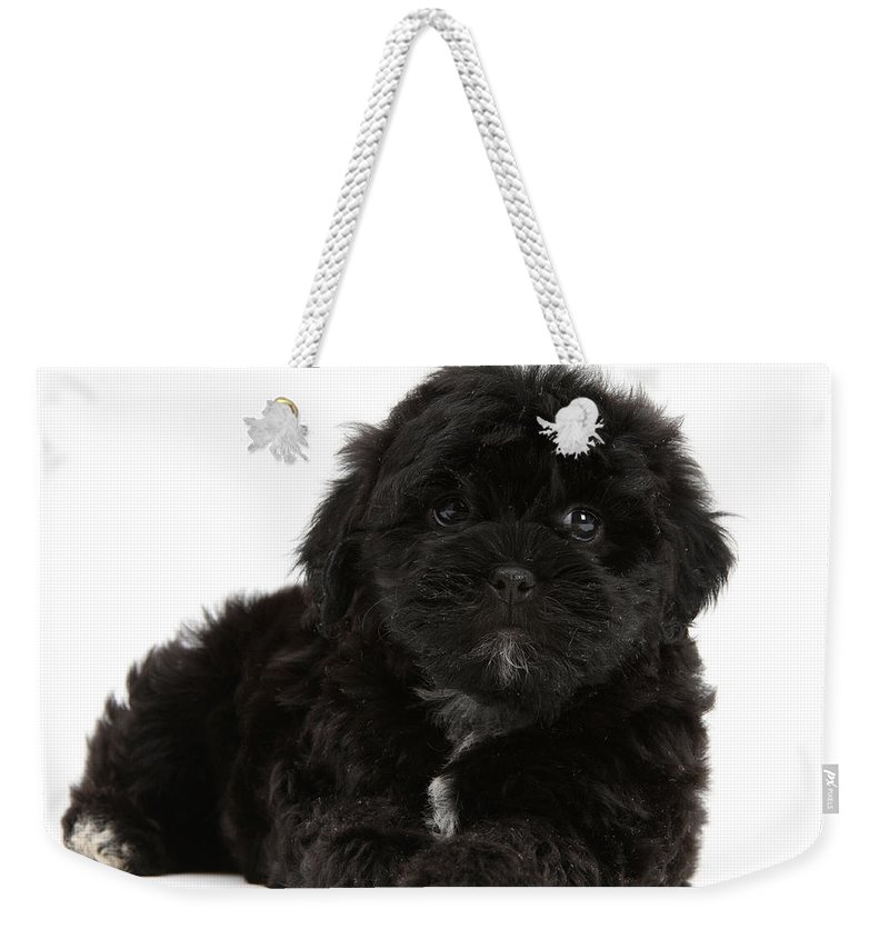 Animal Weekender Tote Bag featuring the photograph Black Cockerpoo Puppy by Mark Taylor