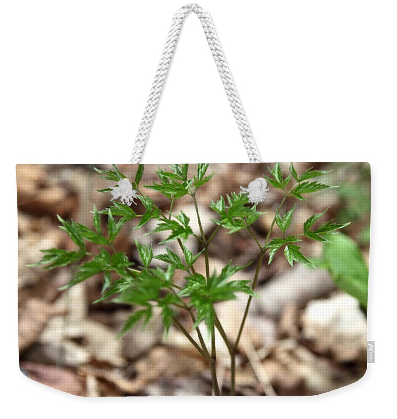 Botanical Weekender Tote Bag featuring the photograph Black Cohosh by Ted Kinsman