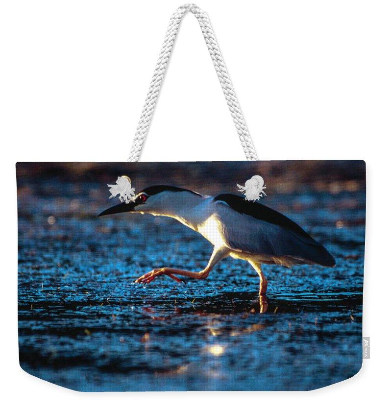 Africa Weekender Tote Bag featuring the photograph Black-crowned Night Heron by Alistair Lyne