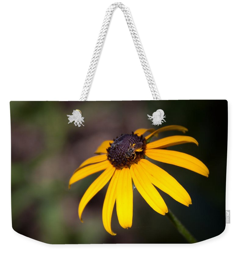 Flora Weekender Tote Bag featuring the photograph Black Eyed Susan With Young Bee by Lynne Jenkins