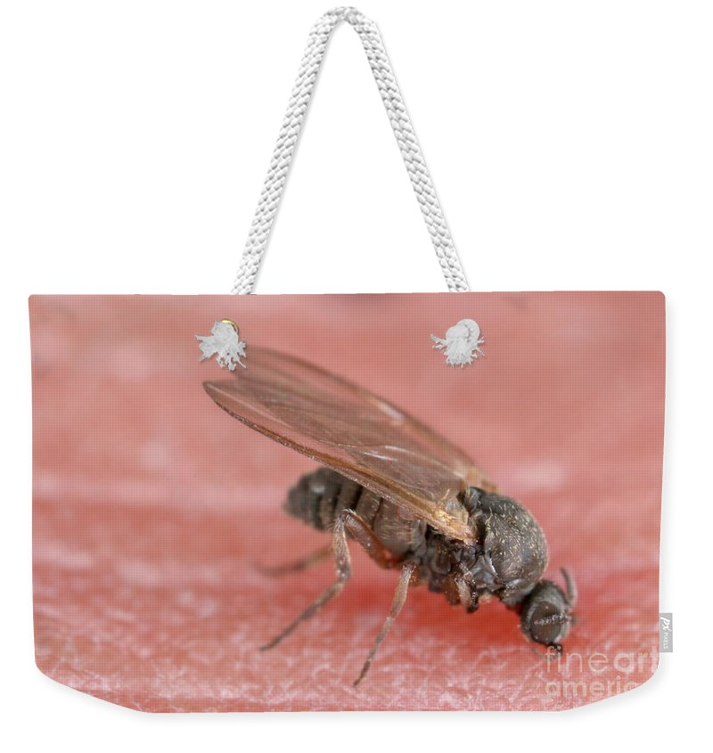 Fauna Weekender Tote Bag featuring the photograph Black Fly by Ted Kinsman
