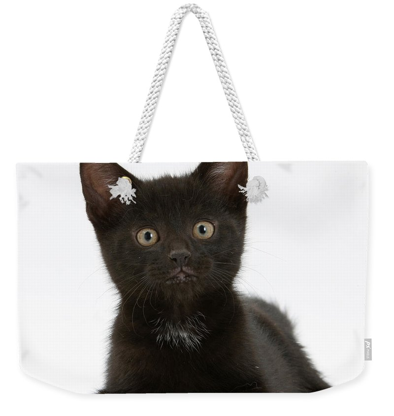 Nature Weekender Tote Bag featuring the photograph Black Kitten by Mark Taylor