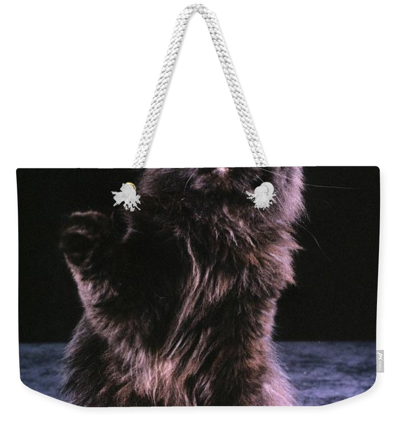 Persian Cat Weekender Tote Bag featuring the photograph Black Persian Cat Reaches by Larry Allan