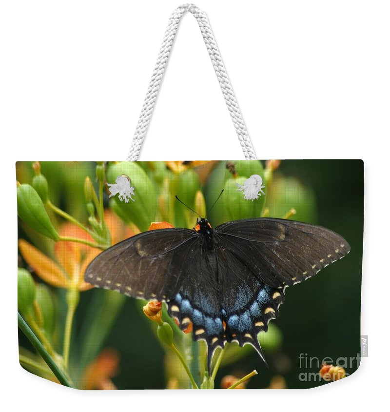 Butterfly Weekender Tote Bag featuring the photograph Black Swallowtail by Living Color Photography Lorraine Lynch