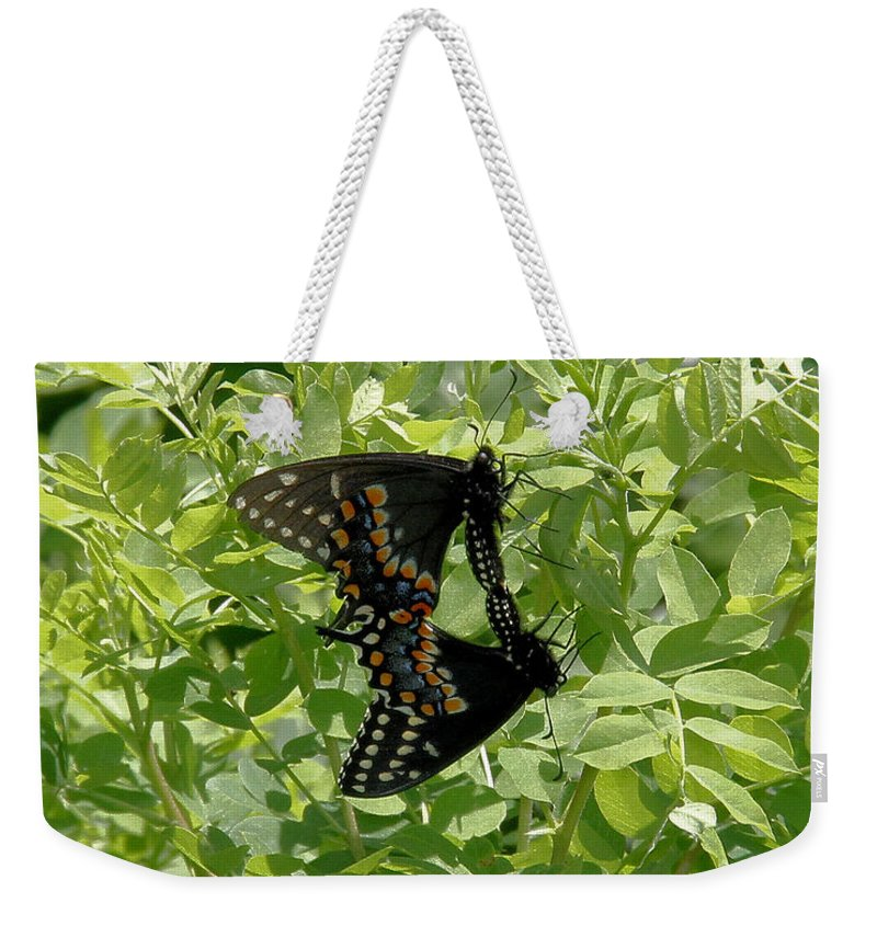 Black Swallowtail Weekender Tote Bag featuring the photograph Black Swallowtails Mating by Doris Potter