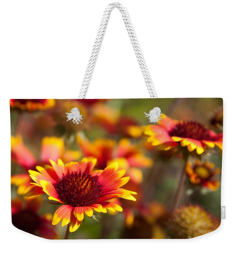 Flora Weekender Tote Bag featuring the photograph Blanket Flowers by Lynne Jenkins