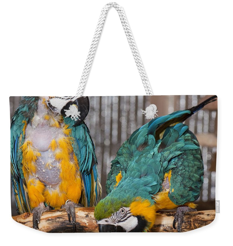 Photography Weekender Tote Bag featuring the photograph Blue And Gold Macaw Pair by Steven Natanson