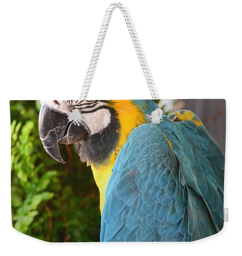 Nature Weekender Tote Bag featuring the photograph Blue And Yellow Macaw by Debbie Portwood