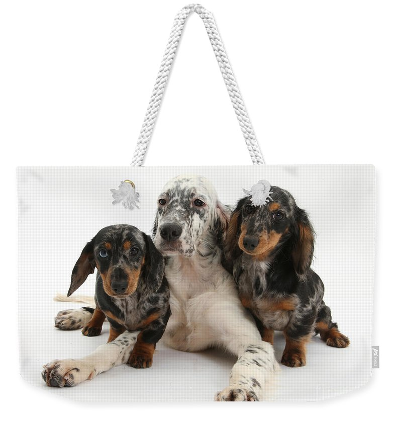 Animal Weekender Tote Bag featuring the photograph Blue Belton Setter And Dachshund Pups by Mark Taylor