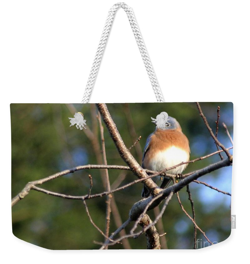 Bird Weekender Tote Bag featuring the photograph Blue Bird by Living Color Photography Lorraine Lynch