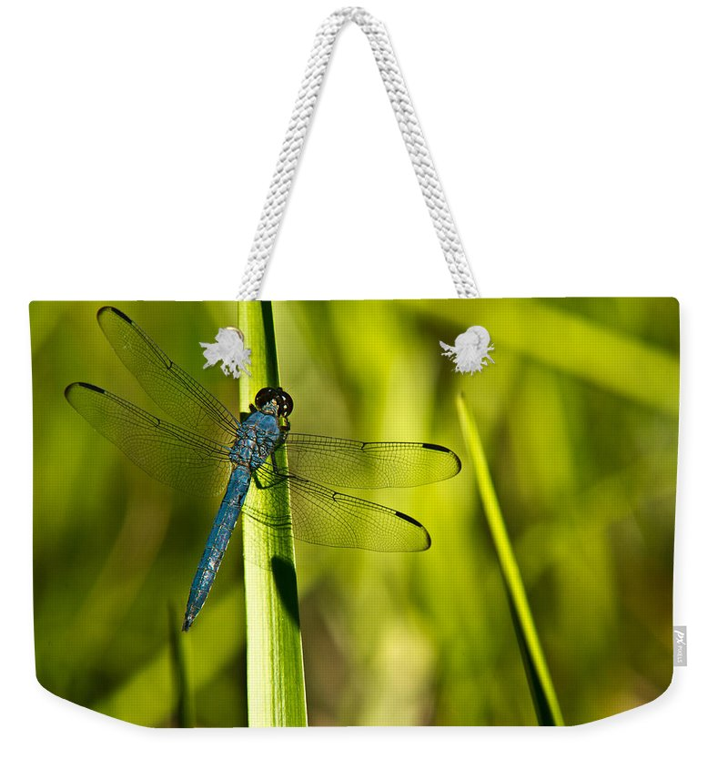 Blue Weekender Tote Bag featuring the photograph Blue Dragonfly 1 by Douglas Barnett