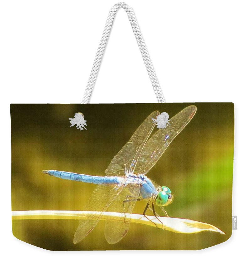 Dragonfly Weekender Tote Bag featuring the photograph Blue Dragonfly by Michelle Cassella