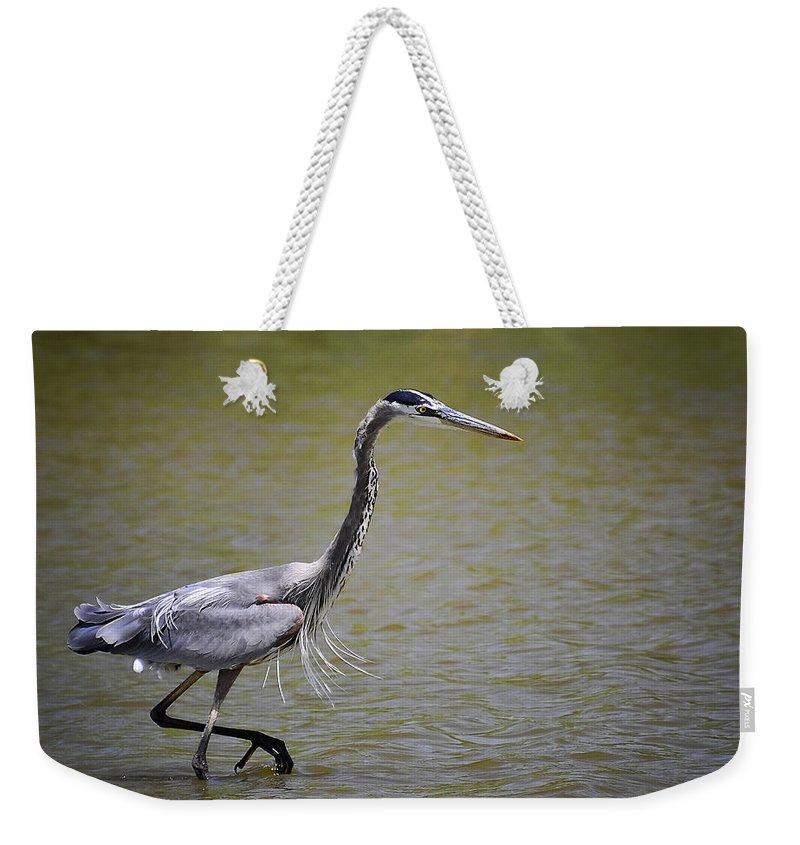 Great Blue Heron Weekender Tote Bag featuring the photograph Blue Heron On The Hunt by Saija Lehtonen