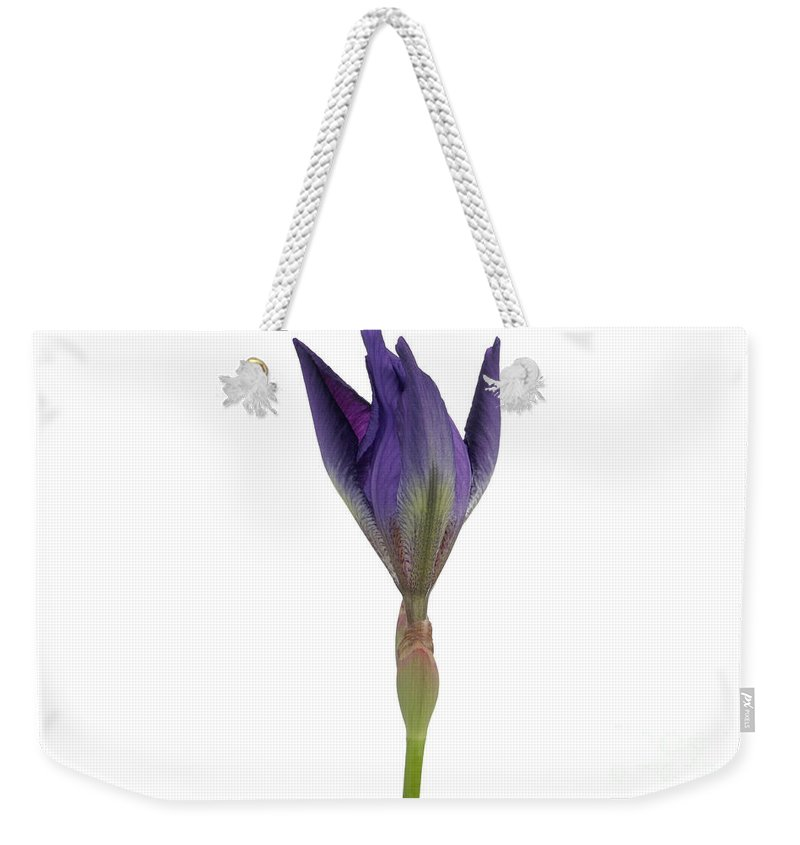 Flora Weekender Tote Bag featuring the photograph Blue Iris Blooming by Ted Kinsman