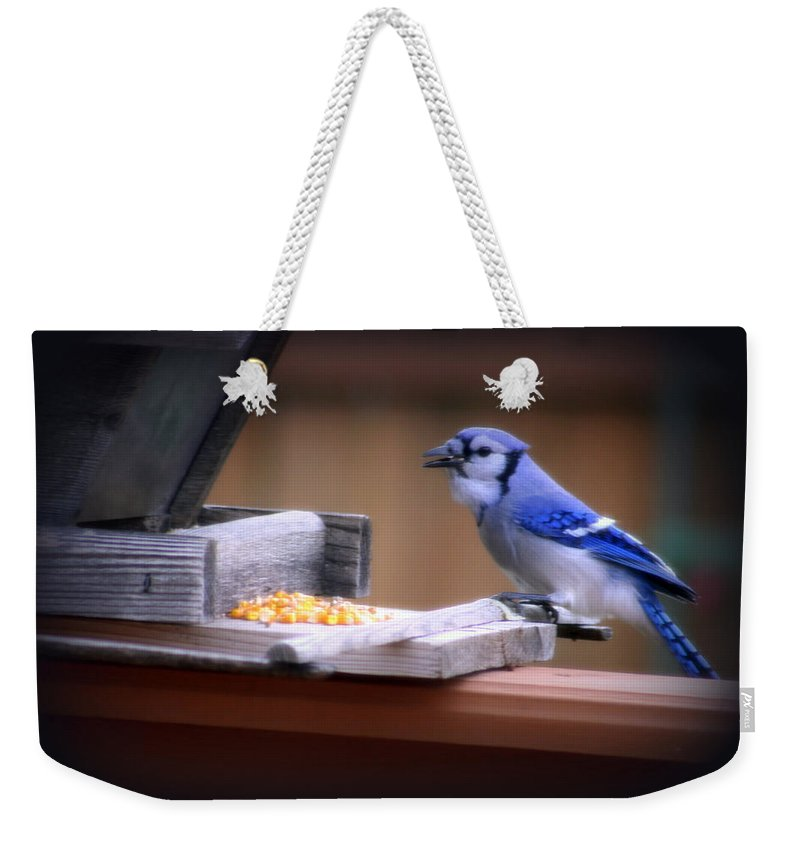Beautiful Weekender Tote Bag featuring the photograph Blue Jay On Backyard Feeder by Kay Novy