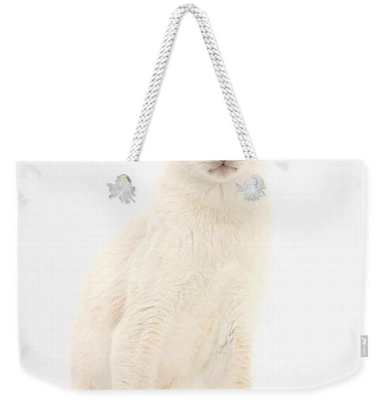 Siamese Weekender Tote Bag featuring the photograph Blue Point Siamese Cat by Mark Taylor