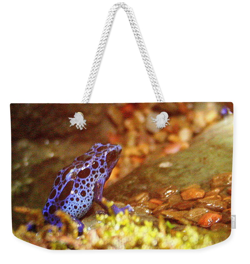 Blue Poison Dart Frog Weekender Tote Bag featuring the photograph Blue Poison Dart Frog by Laurel Talabere