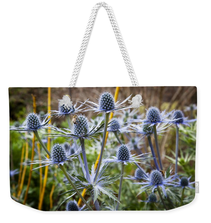 Blue Flowers Weekender Tote Bag featuring the photograph Blue Stem Sea Holly by Kelley King