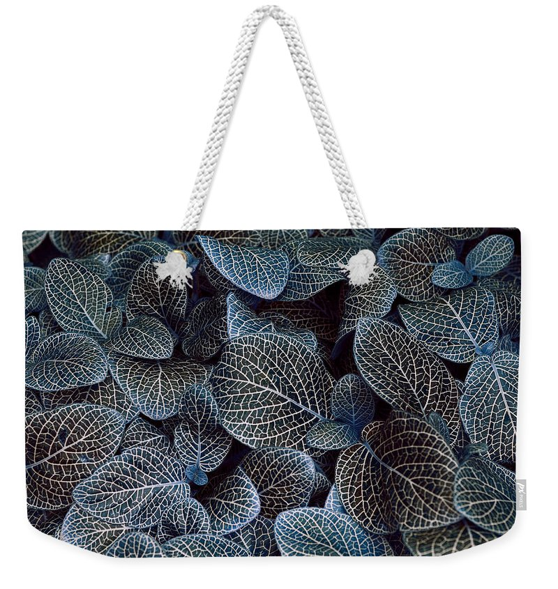Blue Weekender Tote Bag featuring the photograph Bluey by Wayne Sherriff