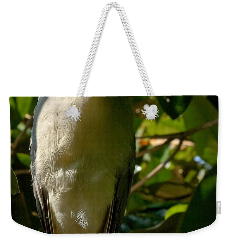 Birds Weekender Tote Bag featuring the photograph Blackcrowned Night Heron by Jean Noren