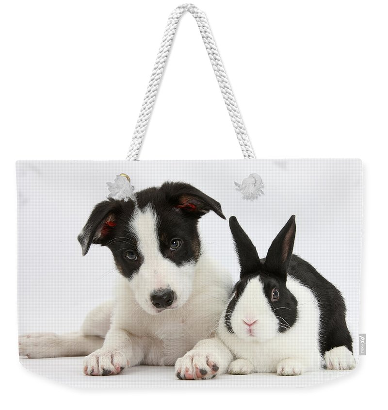 Nature Weekender Tote Bag featuring the photograph Border Collie Pup And Dutch Rabbit by Mark Taylor