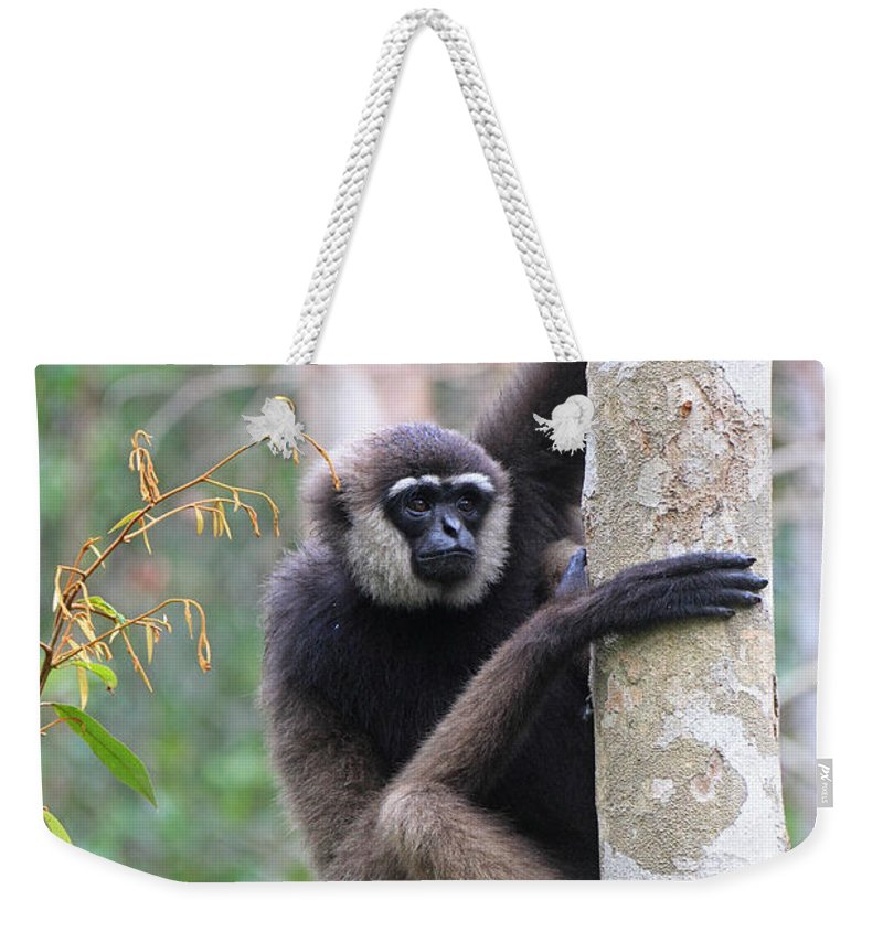 Nature Weekender Tote Bag featuring the photograph Bornean White-bearded Gibbon by Mark Taylor